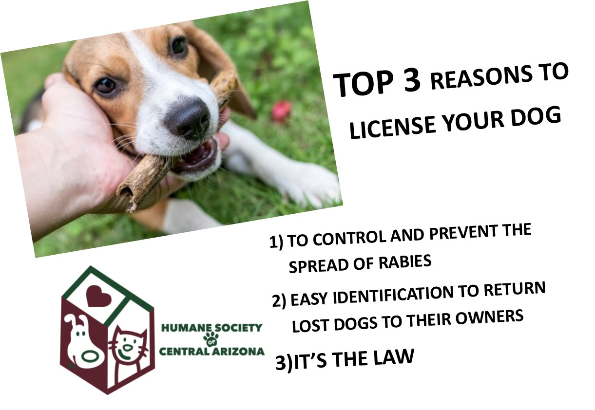 license your dog hscaz