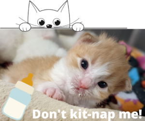 Don't kit-nap me!