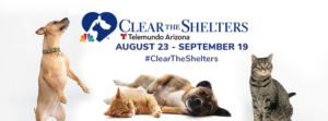 Clear the Shelters 2021